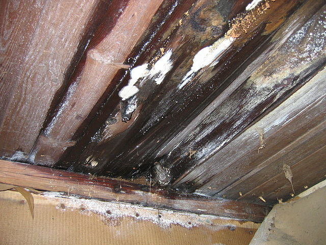 mold inspection edmonton